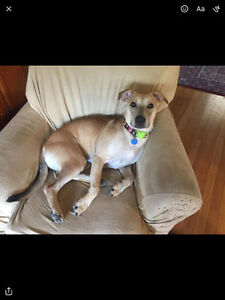 Daisy Seeking foster or foster to adopt