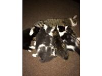 Beautiful fluffy playful kittens