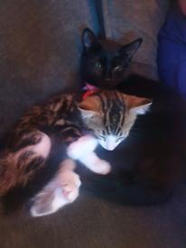 Kitten born on 7th of August