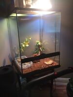 Gecko and Tank