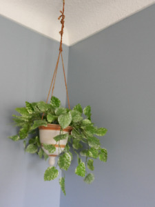 Hanging Planter and Artificial Plant