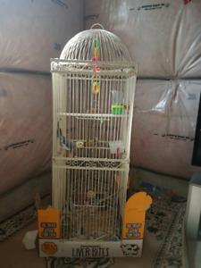 Selling 2 Birds