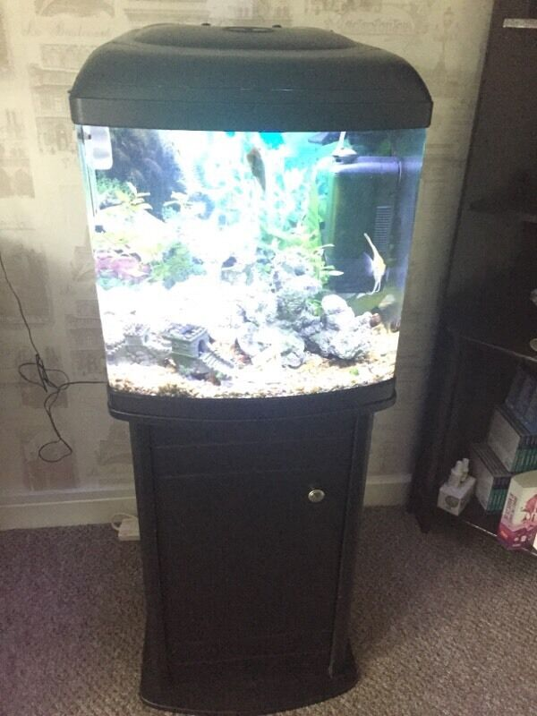 Very cheap aquarium for sale with 8 beautiful fish in for Very cheap furniture for sale