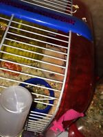 Lovely hamster with cage and accessories