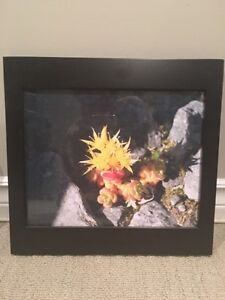 Variety of photo frames for sale Strathcona County Edmonton Area image 3