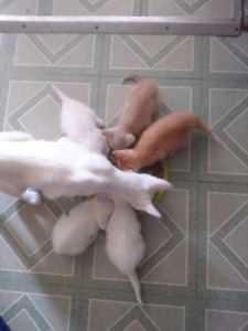 3 kittens left!