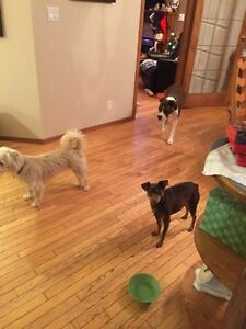 Pet Sitter (in home)