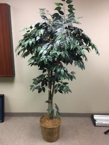 Silk Ficus 6 ft Tree in wicker decorative pot - Artificial tree