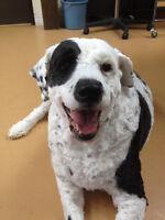 Diva Dogs Dog Grooming Salon