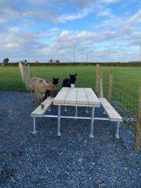 Scaffold garden picnic tables heavy heavy duty last for years