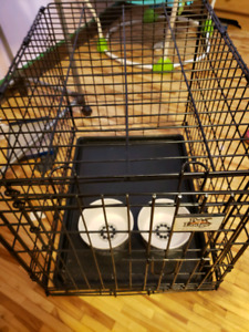 Mediums dog crate and bowls