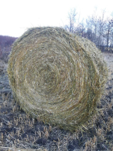 Large round oat straw bales for sale