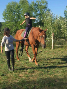 WINTER SALE ON HORSE TRAINING