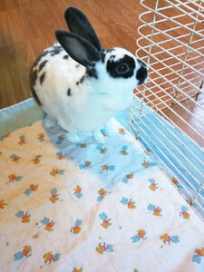 Free Black and white spotted Rabbit