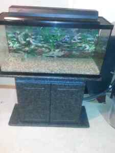 Complete fish tank for sale