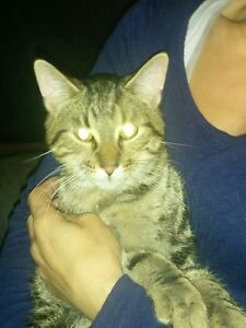 MALE CAT IN NEED OF A NEW HOME!!!!