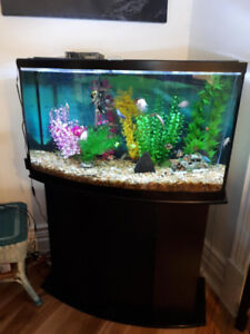 55 gallon bow front fish tank and stand