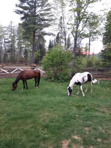 Summer Horse Pasture Wanted
