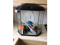 Cold water 25 litre fish tank