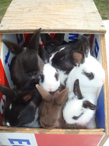 Cute Little Baby Bunnies Needing Forever Homes - ONLY 2 LEFT