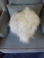 Stuffed Toy Old English Sheepdog (shaggy dog)