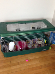 2  female  guiea  pigs  with cage