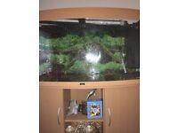 Fish aquarium Jewel