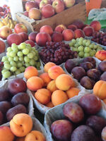 Valley Fresh Fruit is NOW HIRING for the 2017 season!
