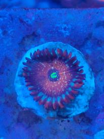 Coral reef marine