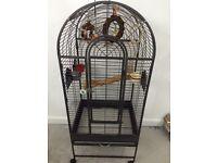 Clean parrot cage
