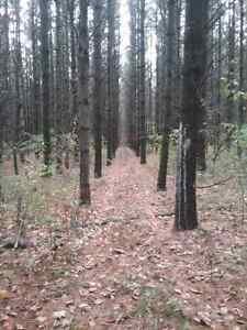 100 Acres for sale outside mount forest  Kitchener / Waterloo Kitchener Area image 7