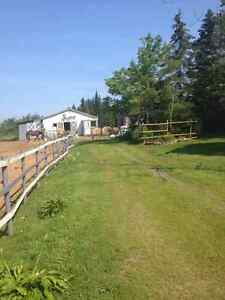 stall for rent and horses to lease