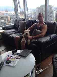 D and C's Dog and Cat Sitting Stratford Kitchener Area image 5