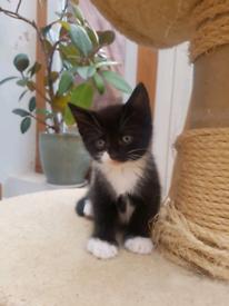 1 male kitten