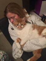 Looking for Temporary Home for my cat Ollie