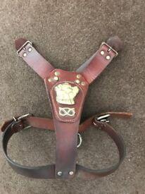 Bulldog leather harness