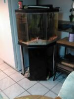 Fish Tank, Fish and Accessories