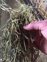 1st cut small square bales