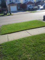 Bi-weekly or Weekly Lawn maintenance, Mowing, Trimming, Call Now