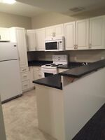 **PET FRIENDLY** 2 bedroom basement suite available Immediately