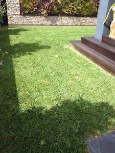 Lawn and garden Hurstville Hurstville Area Preview