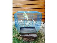 Budgie and cages for sale