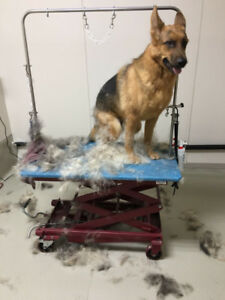 South side pet daycare and grooming