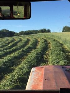Green feed for sale cow hay