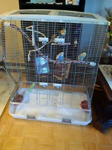 cockatiel with cage and two budgies $125.00