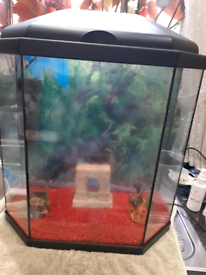 Fish tank coldwater set up 25 litres