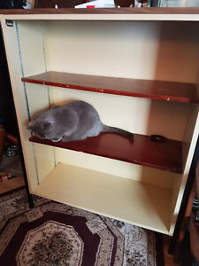 Bookcase/shelving unit - wards against goblin thieves!