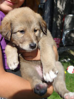 ADORABLE PUPPIES FOR SALE!!