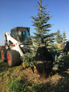 Tree Spading & Bobcat Services