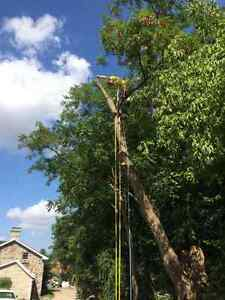 Tip Top Tree Removal and Services Cambridge Kitchener Area image 1